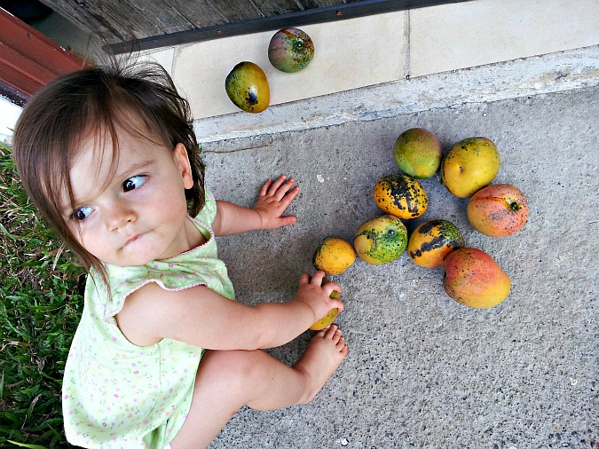 Fresh Mango Sorbet