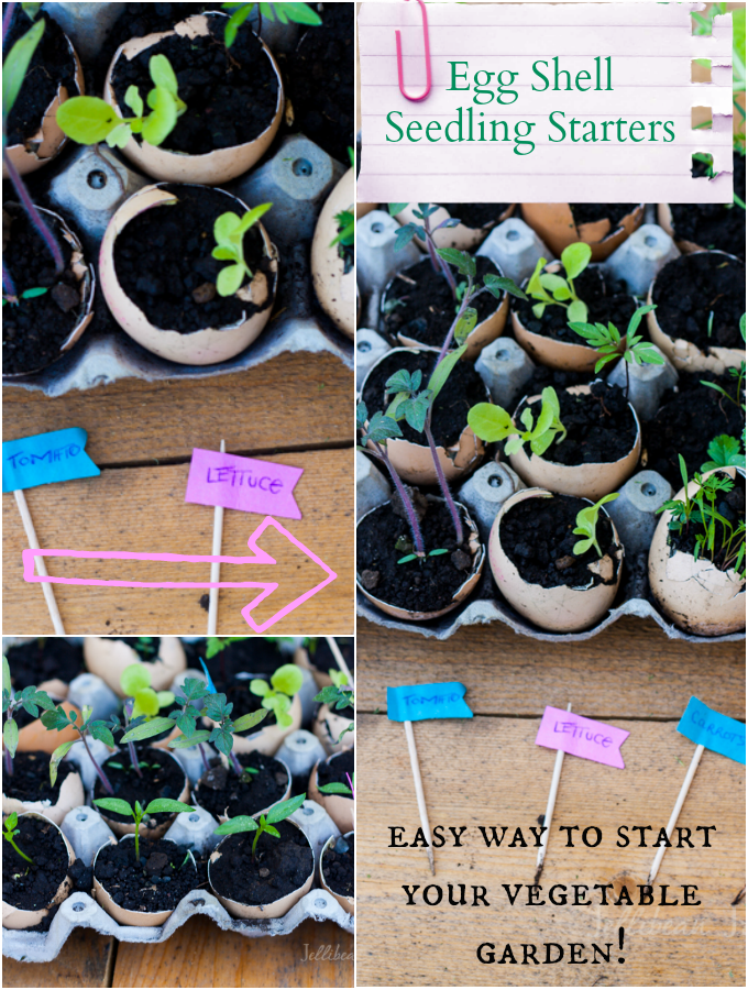 Use Eggshells to Plant Seedlings- a 100% natural and a cheap way to get your garden growing! #seedlings #garden | JellibeanJournals.com